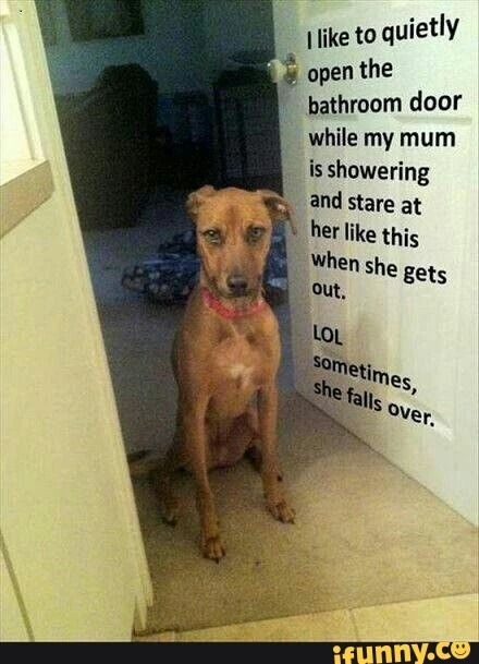 A dog stands in the doorway staring at the shower just to surprise his mum when she gets out, and scares her on purpose. A funny photo.