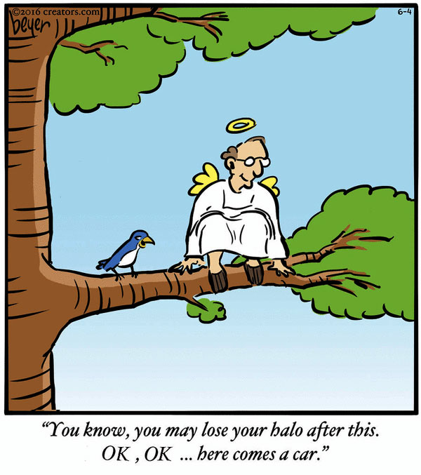 Birdie Birdie In The Sky