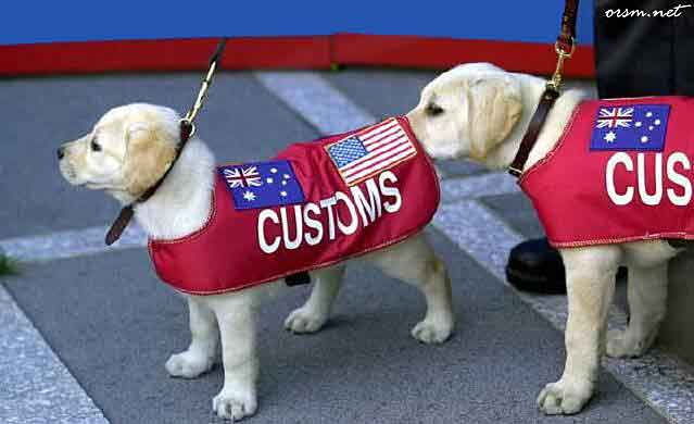 One customs dog sniffing another
