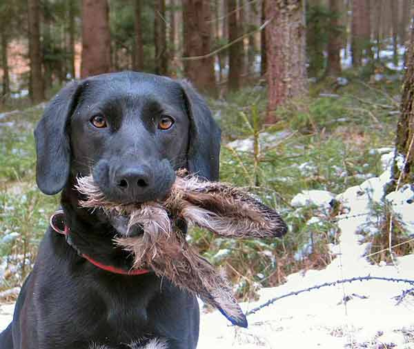 Photo of Dog who caught the easter bunny