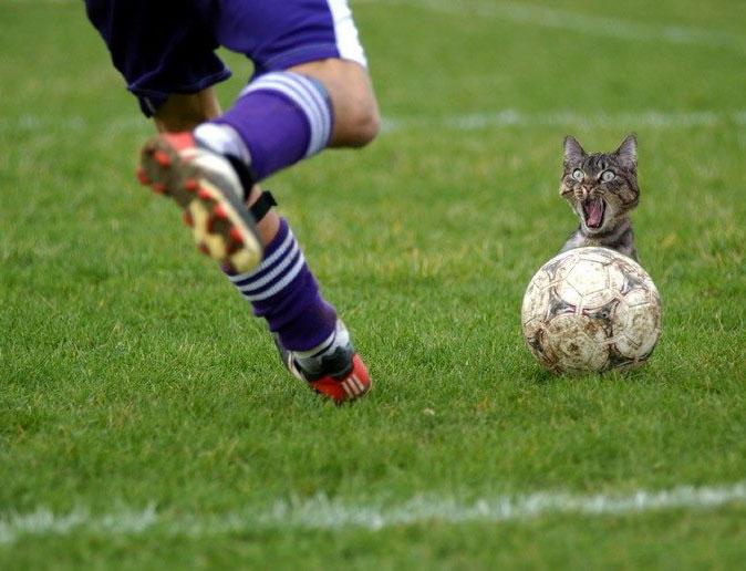komik kedi resimleri