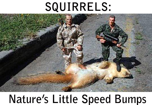 dead squirrel on road with 2 actions figures standing on top of it