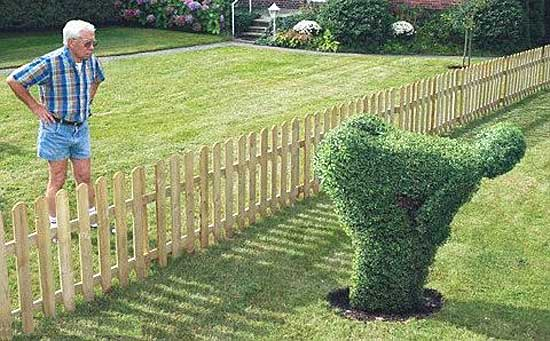 Hedge shaped in form of man mooning neighbor