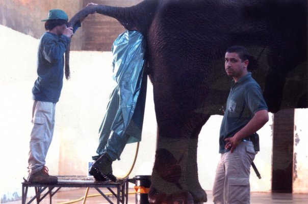Mans job is cleaning elephant butts